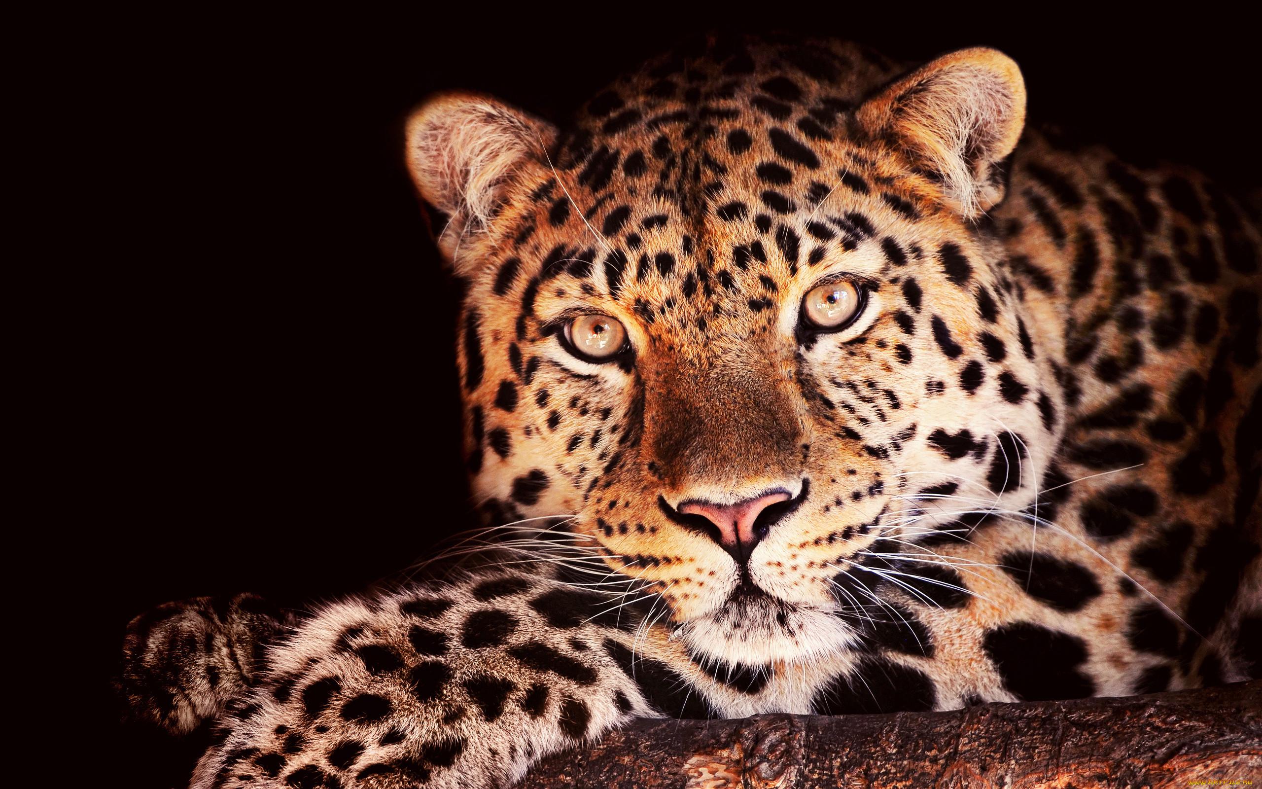 Фотообои животных картинки